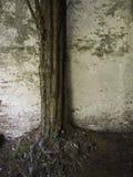 Árbol y pared antiguos imagenes de archivo