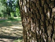 Árbol y parque Imagenes de archivo
