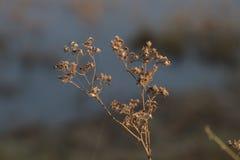 Árbol y pequeño secos imagenes de archivo