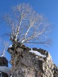 Árbol y piedra Foto de archivo libre de regalías