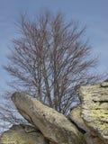 Árbol y piedras con el liquen Fotografía de archivo