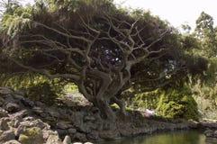 Árbol y piscina Imagen de archivo libre de regalías