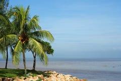 Árbol y playa de coco Fotografía de archivo