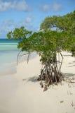 Árbol y playa del mangle foto de archivo