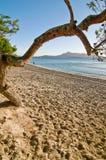 Árbol y playa en la salida del sol Imagen de archivo