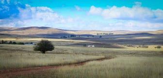 Árbol y prados solos en un paisaje australiano Imágenes de archivo libres de regalías