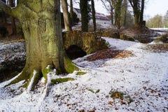 Árbol y puente de haya en el parque imagen de archivo libre de regalías