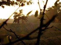 Árbol y puesta del sol Fotos de archivo libres de regalías