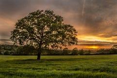 Árbol y puesta del sol Foto de archivo libre de regalías