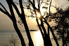 Árbol y puesta del sol Imagenes de archivo