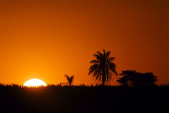 Árbol y puesta del sol de coco Fotos de archivo