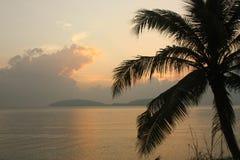 Árbol y puesta del sol de coco Fotos de archivo libres de regalías