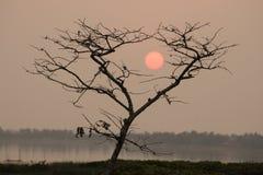 Árbol y puesta del sol en el fondo fotos de archivo libres de regalías