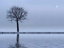 Árbol y río Fotos de archivo