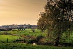 Árbol y río en la caída fotos de archivo
