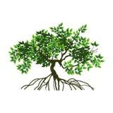 Árbol y raíces ilustración del vector