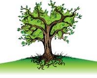 Árbol y raíces Fotos de archivo