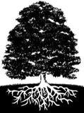 Árbol y raíces Fotografía de archivo