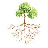 Árbol y raíz Imagen de archivo libre de regalías