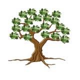 Árbol y raíz Foto de archivo libre de regalías