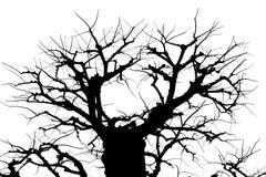 Árbol y rama aislados en blanco y negro Fotos de archivo