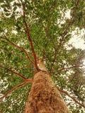 Árbol y ramas verdes Imagen de archivo libre de regalías