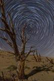 Árbol y rastros aterrorizados de la estrella sobre las dunas de Tarifa Fotos de archivo libres de regalías