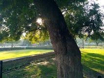 Árbol y rayos de sol grandes Fotografía de archivo