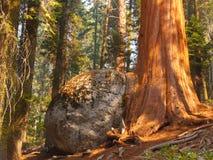 Árbol y roca Fotos de archivo