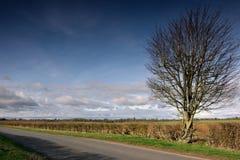 Árbol y seto Foto de archivo