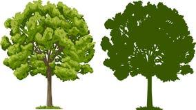 Árbol y silueta ilustración del vector