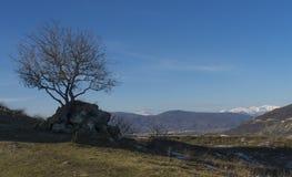 Árbol y soporte secos Kazbegi Foto de archivo libre de regalías