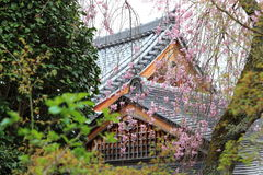 Árbol y templo de Sakura en Japón Imagen de archivo libre de regalías