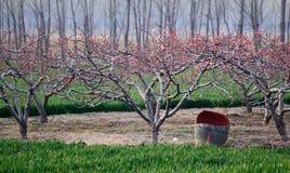 Campo de la primavera fotografía de archivo libre de regalías
