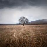 Árbol y tormenta Imagen de archivo libre de regalías