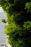 Árbol y torre imagen de archivo
