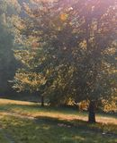Árbol y trayectoria Fotos de archivo libres de regalías