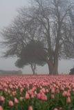 Árbol y tulipanes Imagen de archivo