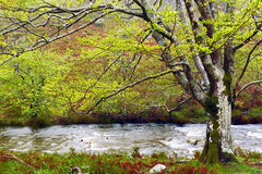 Árbol y un río Imagen de archivo