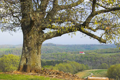 Árbol y una granja Imagenes de archivo