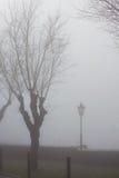 Árbol y una luz de calle solitaria fotografía de archivo