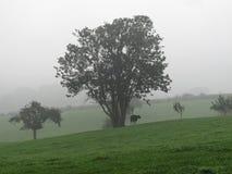 Árbol y vaca en paisaje inclinado del prado Imagen de archivo