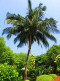 Árbol y vegetación Imagen de archivo