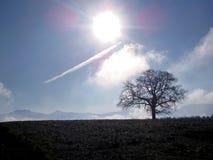 Árbol y visión y kampenwand alpinos Foto de archivo