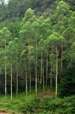 Árboles Imagenes de archivo