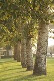 Árboles Foto de archivo