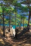 Árboles 14 de la costa costa Imágenes de archivo libres de regalías