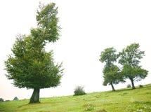 Árboles Fotos de archivo libres de regalías