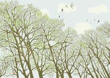 Árboles stock de ilustración