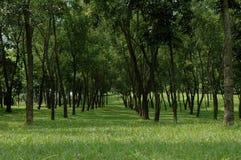Árboles Foto de archivo libre de regalías